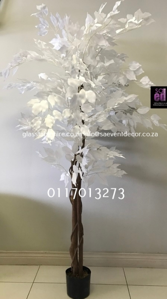 White 5ft Artificial Ficus Tree